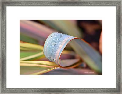 Soft Like Morning Dew Framed Print by Donna Blackhall