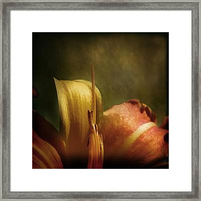 Framed Print featuring the photograph Soft Lily by Gary Smith