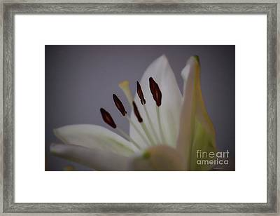 Soft Lily Framed Print