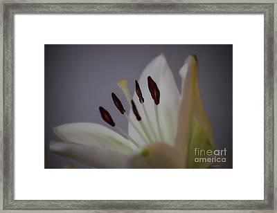 Soft Lily Framed Print by Roberta Byram