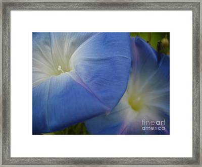 Soft Morning Glory Framed Print by Chad Natti