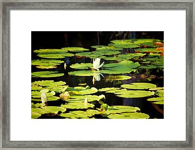Framed Print featuring the photograph Soft Morning Light by Jan Amiss Photography