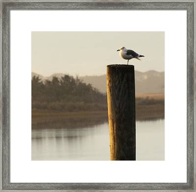 Soft Mornings Framed Print