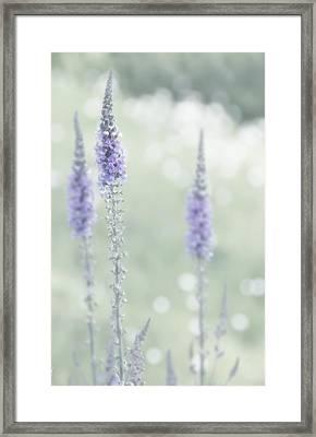 Soft Pastels Framed Print by Svetlana Sewell