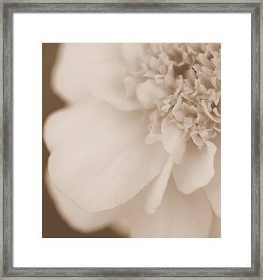 Soft Petals Framed Print by Christine Ricker Brandt