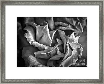 Soft Petals For My Valentine Framed Print