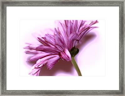 Soft Petals Framed Print by Martin Newman
