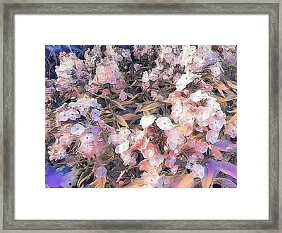Soft Phlox Framed Print by Nancy Pauling