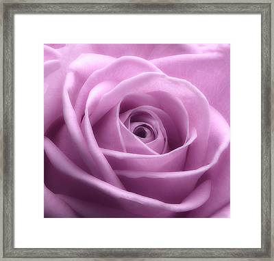 Soft Pink Beauty 3 Framed Print