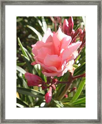 Soft Pink Blush Framed Print