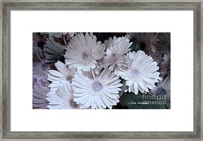 Soft Pink Daisy Bouquet Framed Print by Jeannie Rhode