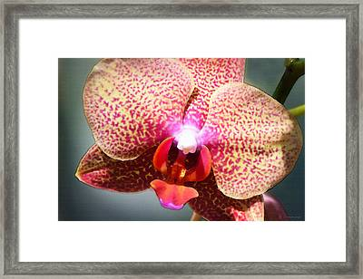 Soft Pink Orchid By Sharon Cummings Framed Print