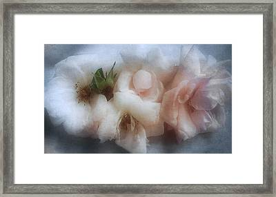 Framed Print featuring the photograph Soft Pink Roses by Louise Kumpf