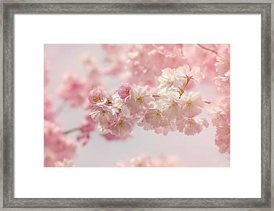 Soft Pink Spring Framed Print