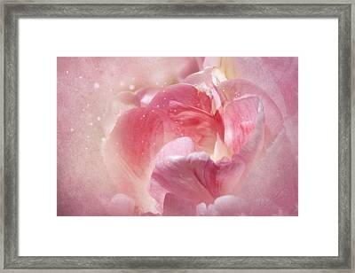 Soft Pink Tulips Framed Print