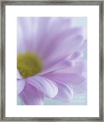 Soft Place To Fall Framed Print