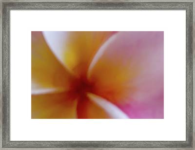 Framed Print featuring the photograph Soft Plumeria by Roger Mullenhour