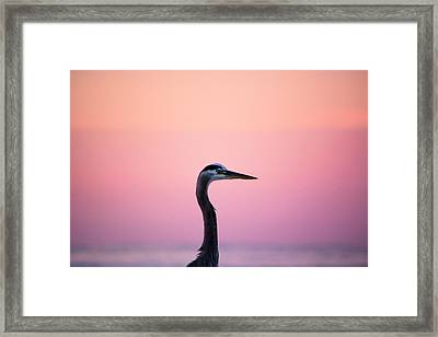 Soft Portrait Framed Print by Shelby Young