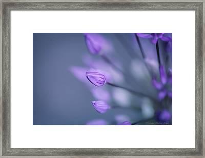 Soft Purple Framed Print