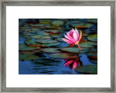 Soft Reflection Framed Print