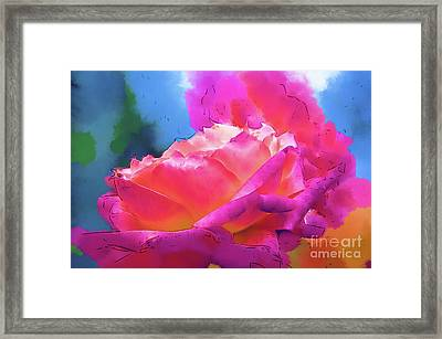 Soft Rose Bloom In Red And Purple Framed Print