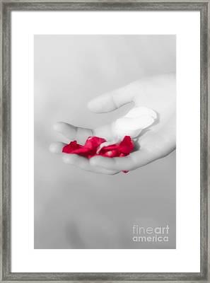 Soft Rose Petals Framed Print by Jorgo Photography - Wall Art Gallery