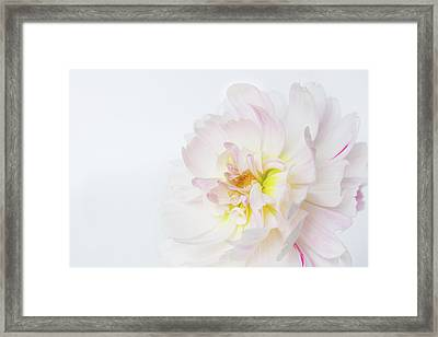 Framed Print featuring the photograph Soft Ruffles by Mary Jo Allen
