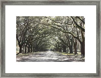 Soft Southern Day Framed Print by Carol Groenen