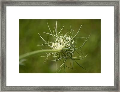 Soft Spiky Back Framed Print by Tina M Wenger