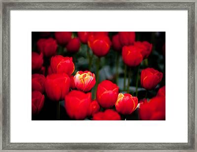 Soft Spotlight L572 Framed Print by Yoshiki Nakamura