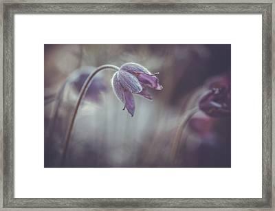 Soft Spring Adagio Framed Print by Jenny Rainbow