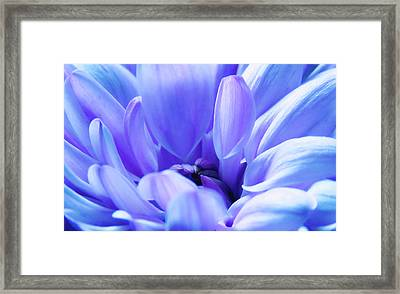 Soft Touch 2 Framed Print