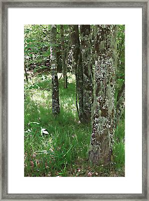 Framed Print featuring the photograph Soft Trees by Shari Jardina