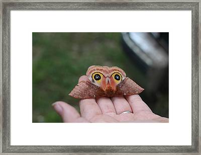Soft Tuch Framed Print by Lee Anderson