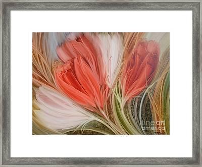 Soft Tulips Framed Print by Fatima Stamato
