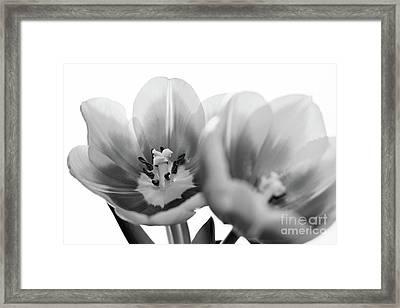 Soft Whispers Framed Print