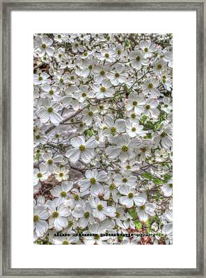 Soft White Framed Print