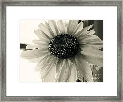 Soft White Light Framed Print by Trish Hale