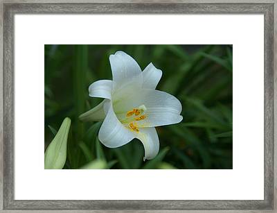 Framed Print featuring the photograph Soft White by Monte Stevens