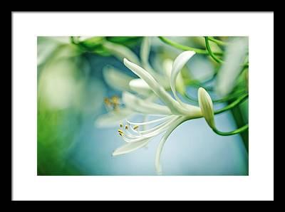 Soft Focus Photographs Framed Prints