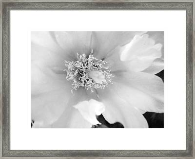 Soft White Framed Print by Rosalie Scanlon