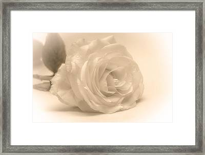 Framed Print featuring the photograph Soft White Rose by Scott Carruthers
