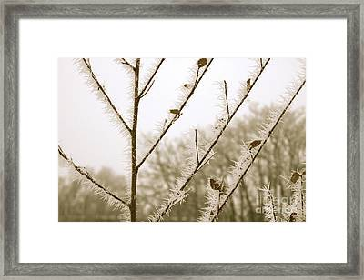 Soft Winter Sepia Branches Framed Print by Carol Groenen