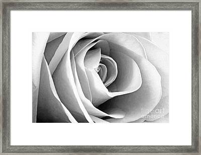 Softened Rose Framed Print