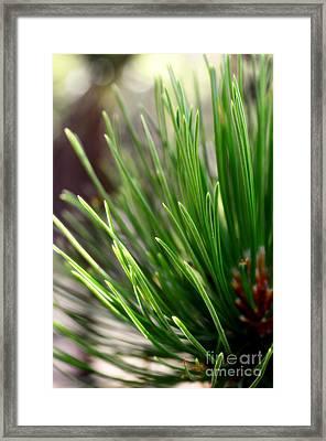 Softer Side Of Pine Framed Print