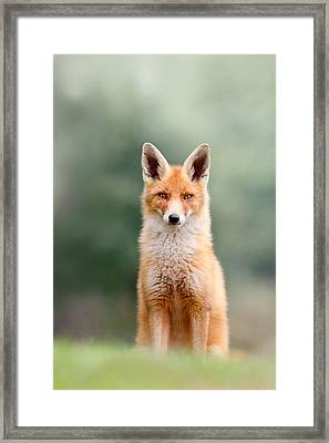 Softfox - Red Fox Sitting Framed Print by Roeselien Raimond