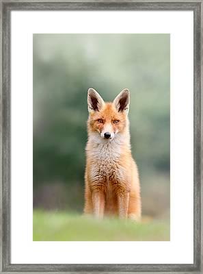 Softfox - Red Fox Sitting Framed Print