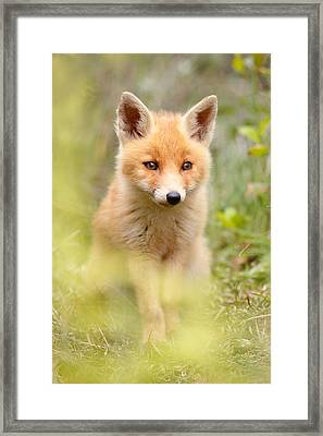 Softfox Framed Print by Roeselien Raimond