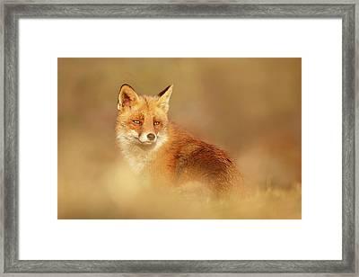 Softfox Series - Red Fox Blending In Framed Print