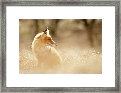 Softfox Series - Sunshine Fox Framed Print
